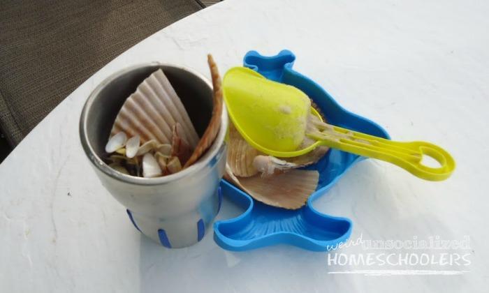 seashell chemical reactions
