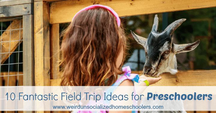 10 Fantastic Field Trip Ideas for Preschoolers