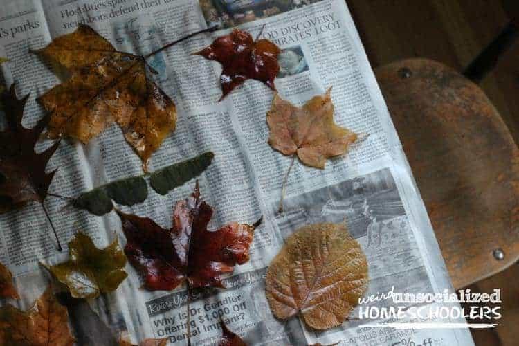 tips for preserving fall leaves